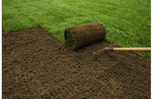 Jak założyć trawnik z rolki? Poradnik krok po kroku