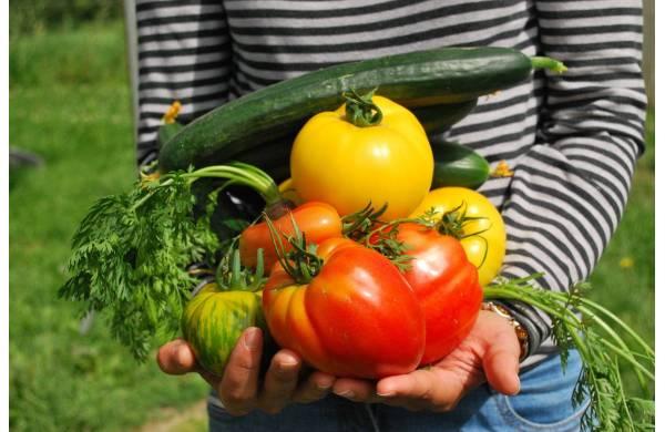 warzywa wzmacniająca montaż